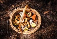 truffle and porcini week